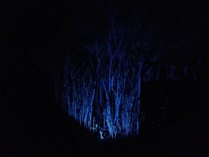 LED RGB Strahler am Flieder