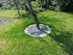 Steinbeet Apfelbaum