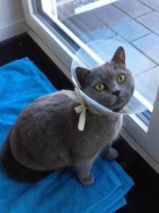 Shiba mit Trichter will raus