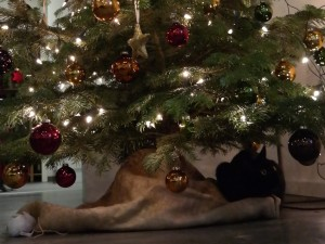Katze Weihnachtsbaum