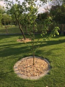 Holzhäclsel - Bäume auf der Obstwiese