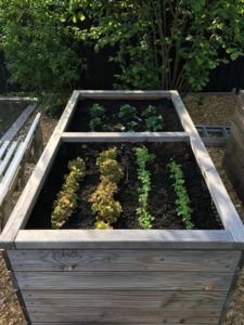 Nutzgarten mit Hochbeet und Gewächshaus - Hochbeet - Salat und Karotten